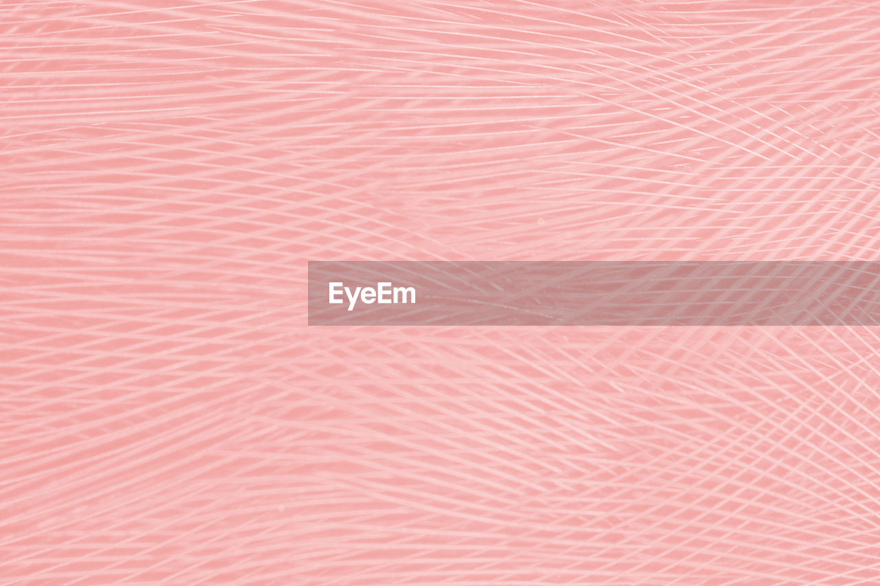 Beautiful line soft pink feather wing pattern texture background