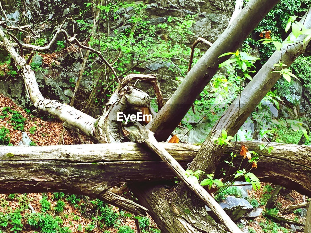 tree, nature, tree trunk, day, outdoors, forest, no people, branch, growth, beauty in nature, dead tree, close-up