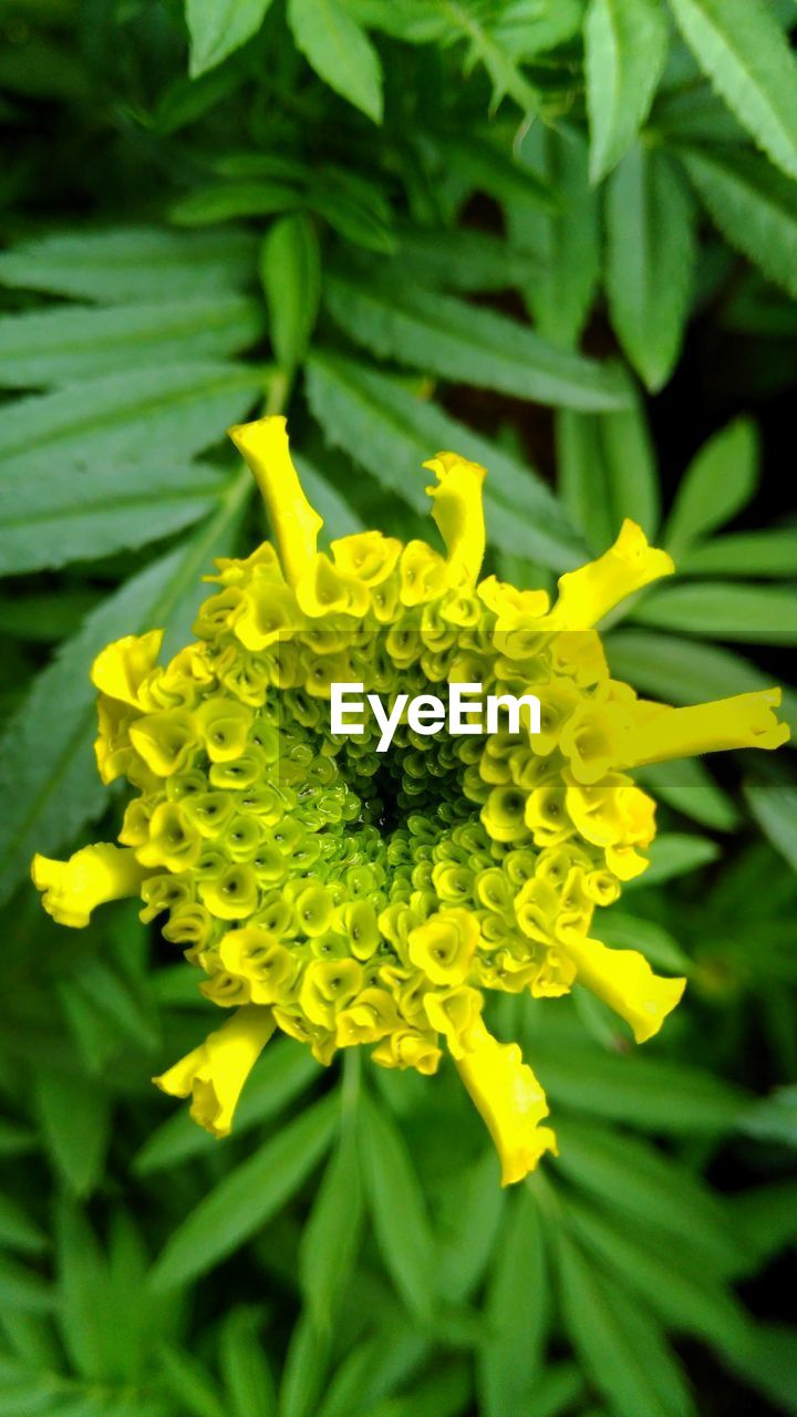 flower, yellow, growth, nature, fragility, freshness, beauty in nature, petal, green color, plant, no people, flower head, outdoors, day, close-up, blooming