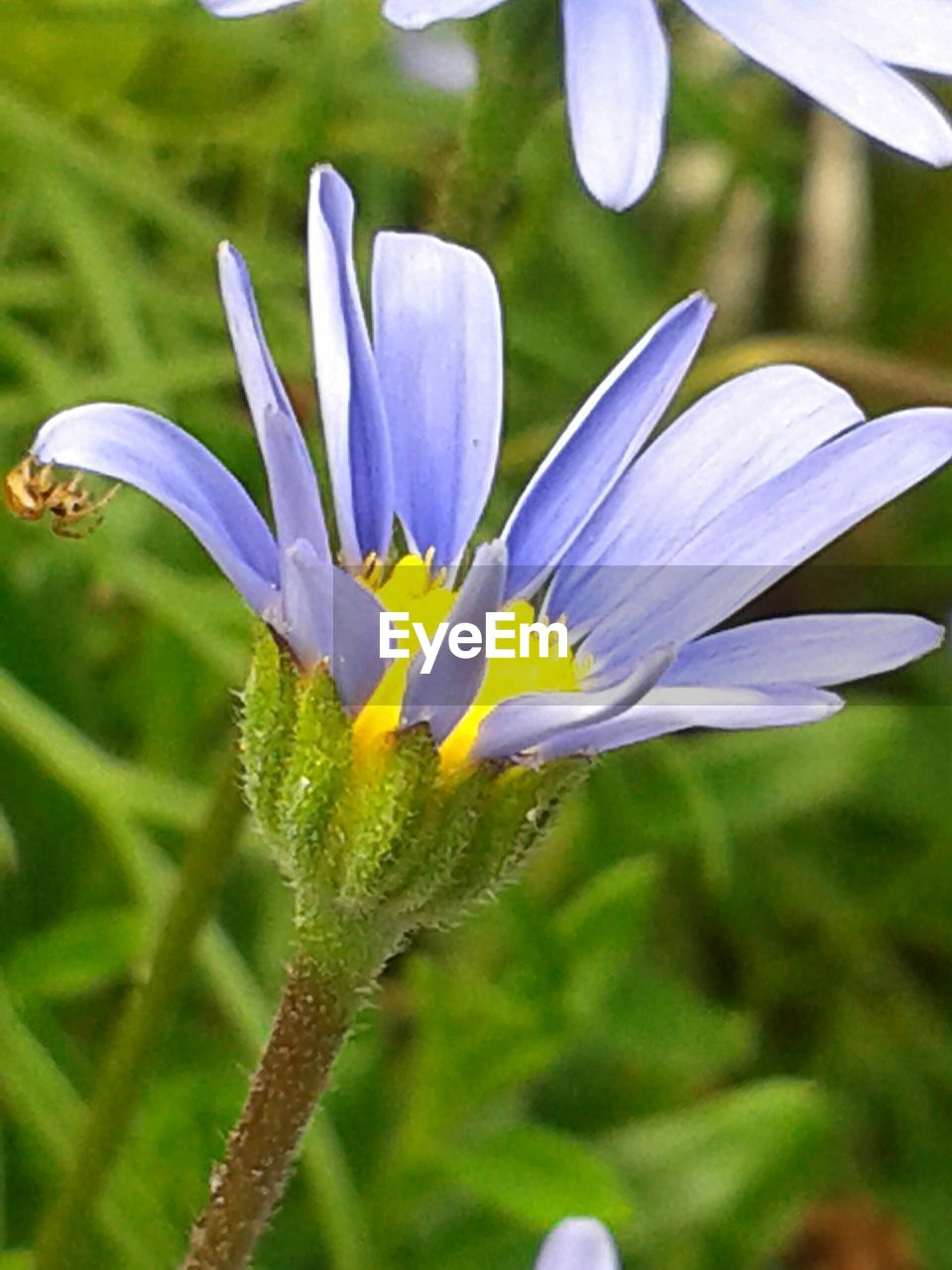 flower, growth, petal, nature, fragility, beauty in nature, flower head, plant, freshness, close-up, focus on foreground, day, no people, outdoors, blooming, crocus