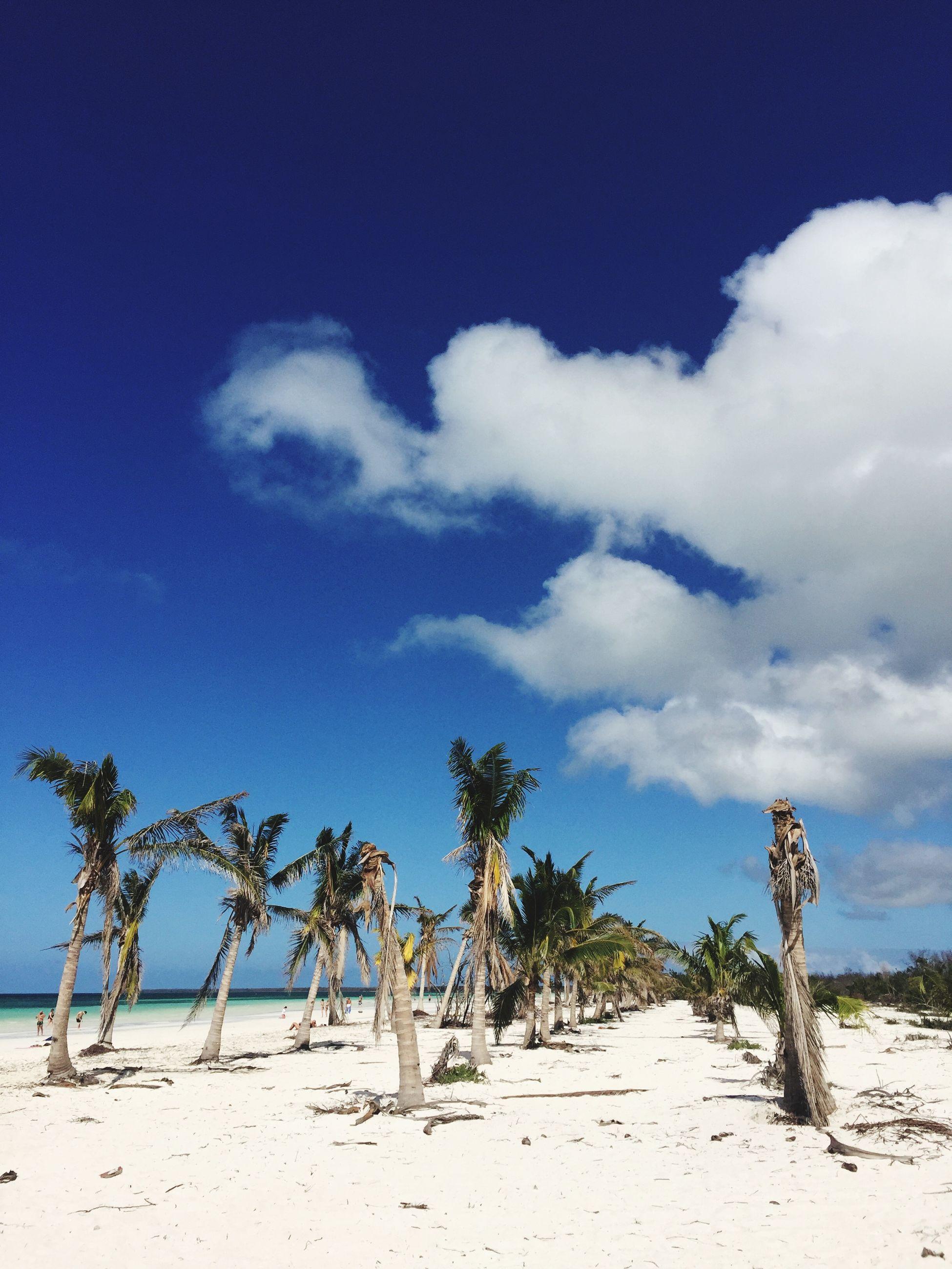 TREES ON BEACH AGAINST BLUE SKY