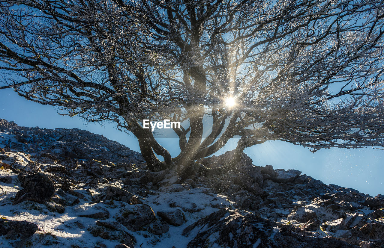 tree, winter, snow, cold temperature, plant, beauty in nature, sunlight, tranquility, nature, scenics - nature, branch, sky, no people, day, bare tree, sunbeam, tranquil scene, sun, land, lens flare, outdoors, bright, snowcapped mountain
