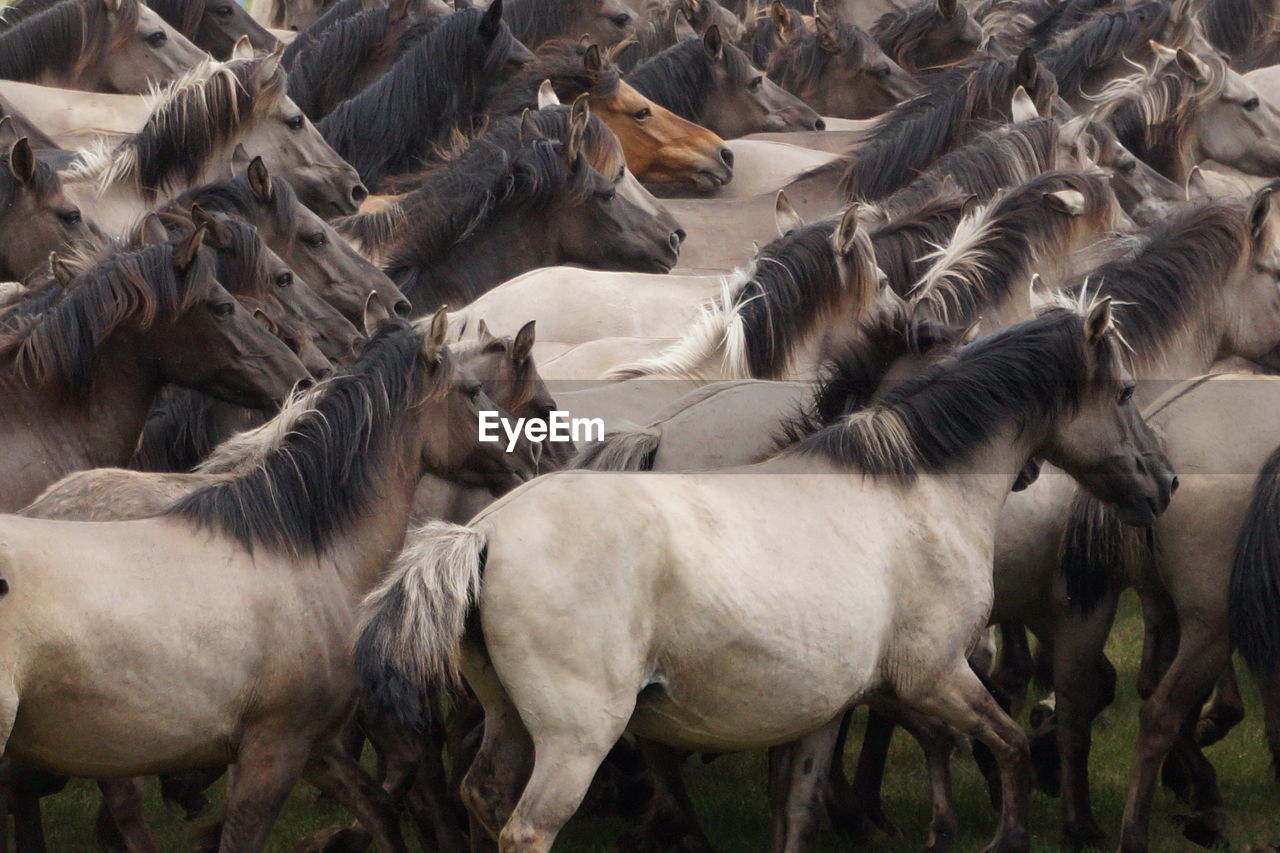Full Frame Shot Of Horses