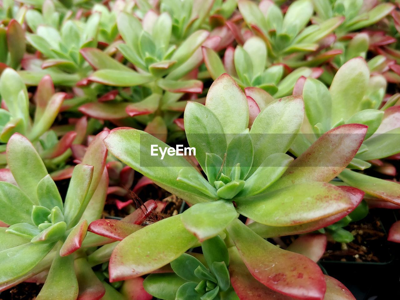 growth, plant part, leaf, green color, plant, beauty in nature, close-up, no people, nature, day, freshness, high angle view, focus on foreground, full frame, selective focus, outdoors, fragility, vulnerability, backgrounds, succulent plant