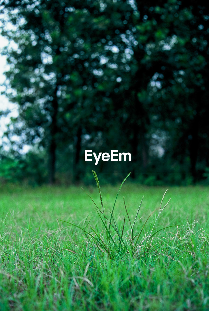 grass, growth, green color, nature, tranquility, tree, field, day, plant, tranquil scene, outdoors, no people, beauty in nature, scenics, landscape, close-up, freshness