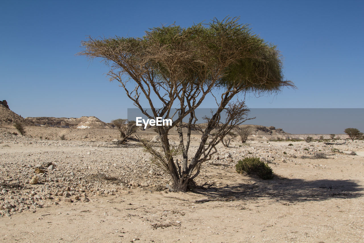 SINGLE TREE IN DESERT