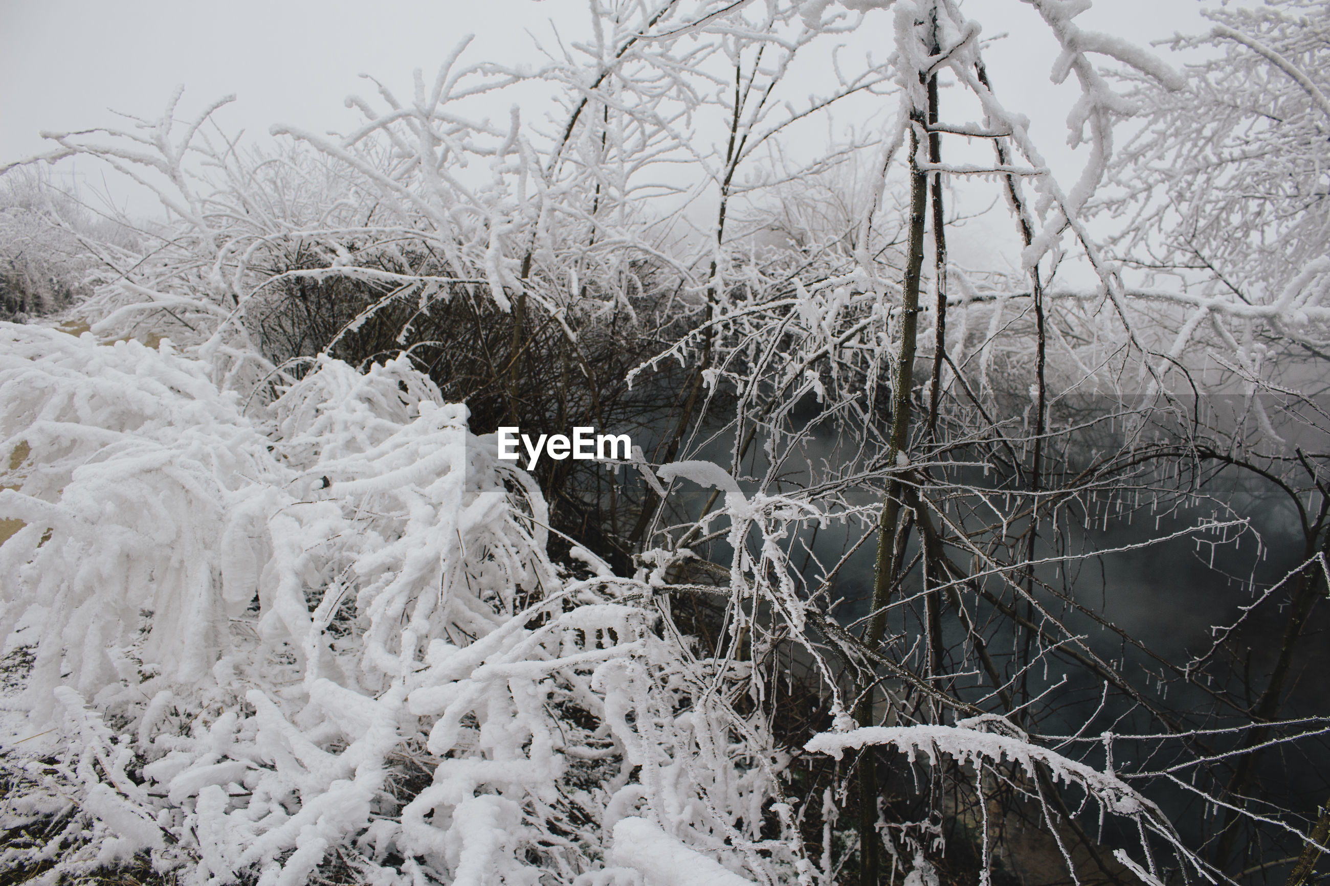 CLOSE-UP OF FROZEN FROST