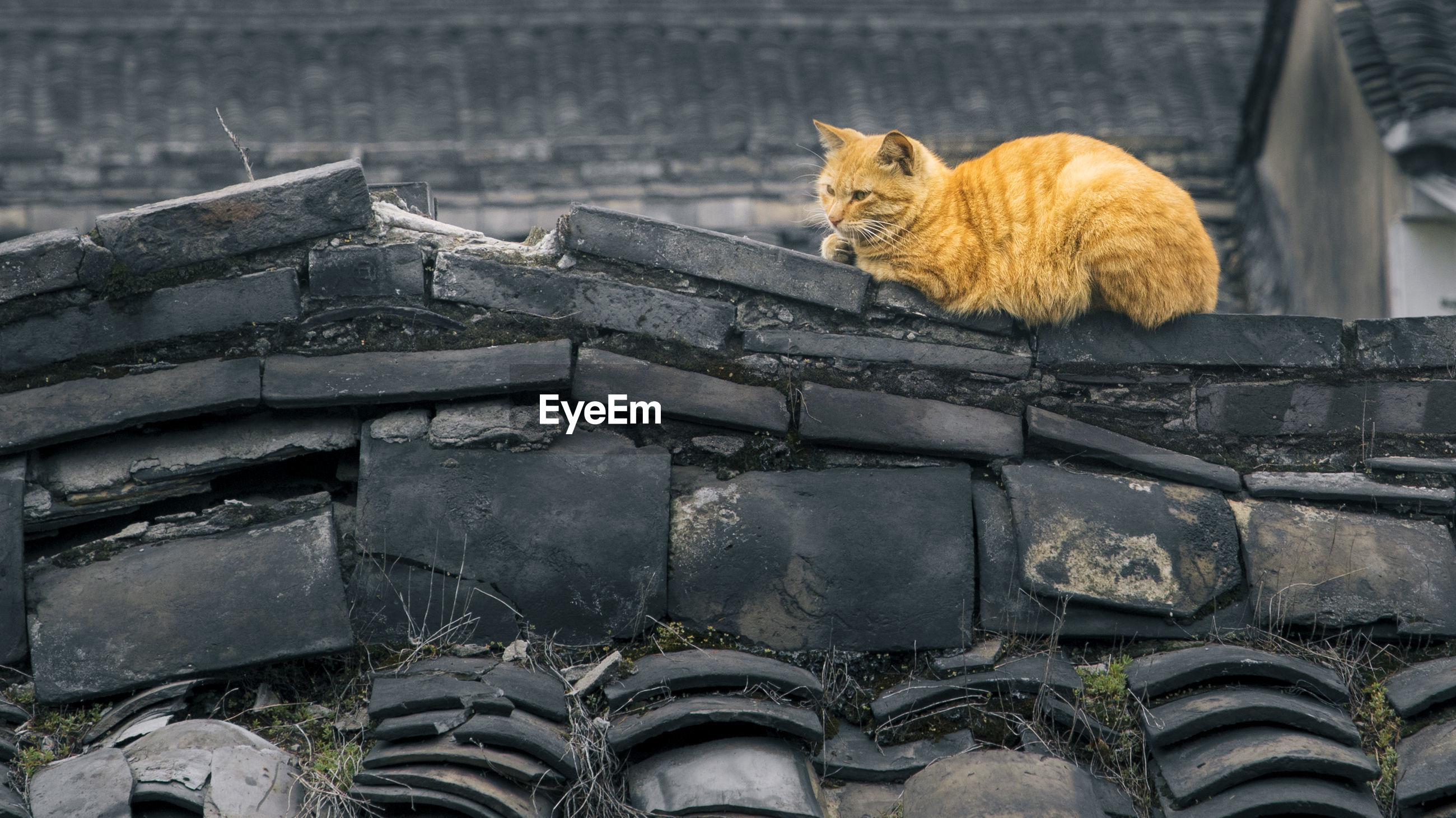 Cat sitting on roof