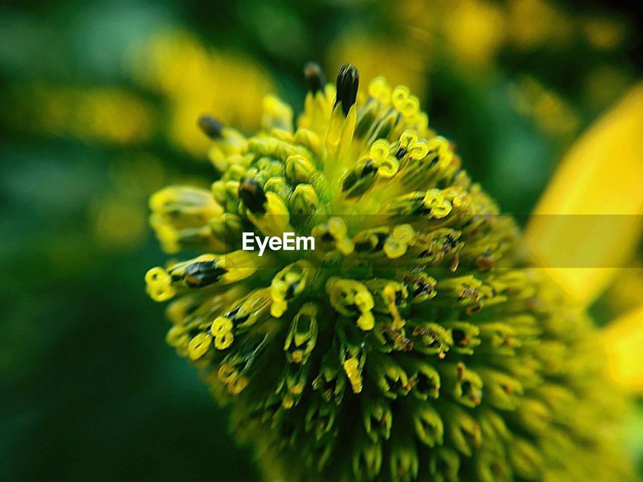 flower, flowering plant, beauty in nature, vulnerability, fragility, freshness, yellow, plant, close-up, flower head, growth, inflorescence, petal, selective focus, day, nature, focus on foreground, pollen, no people, outdoors