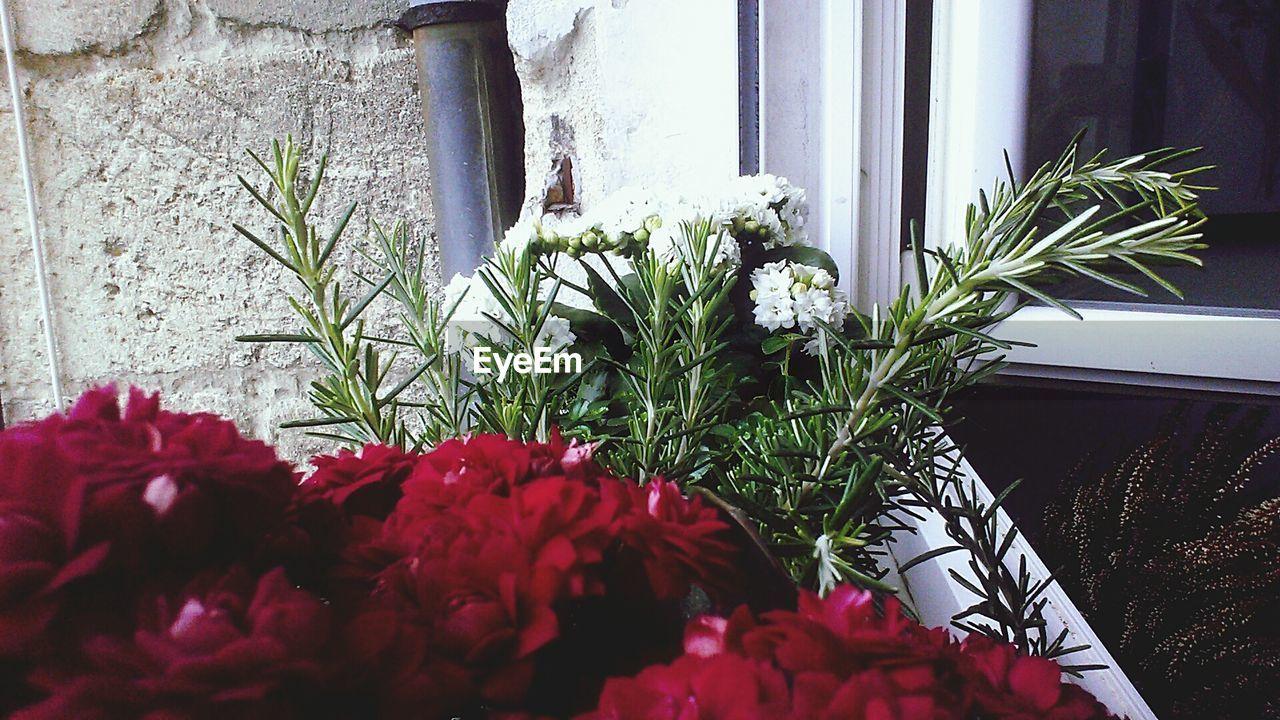 PLANT GROWING IN BACKYARD