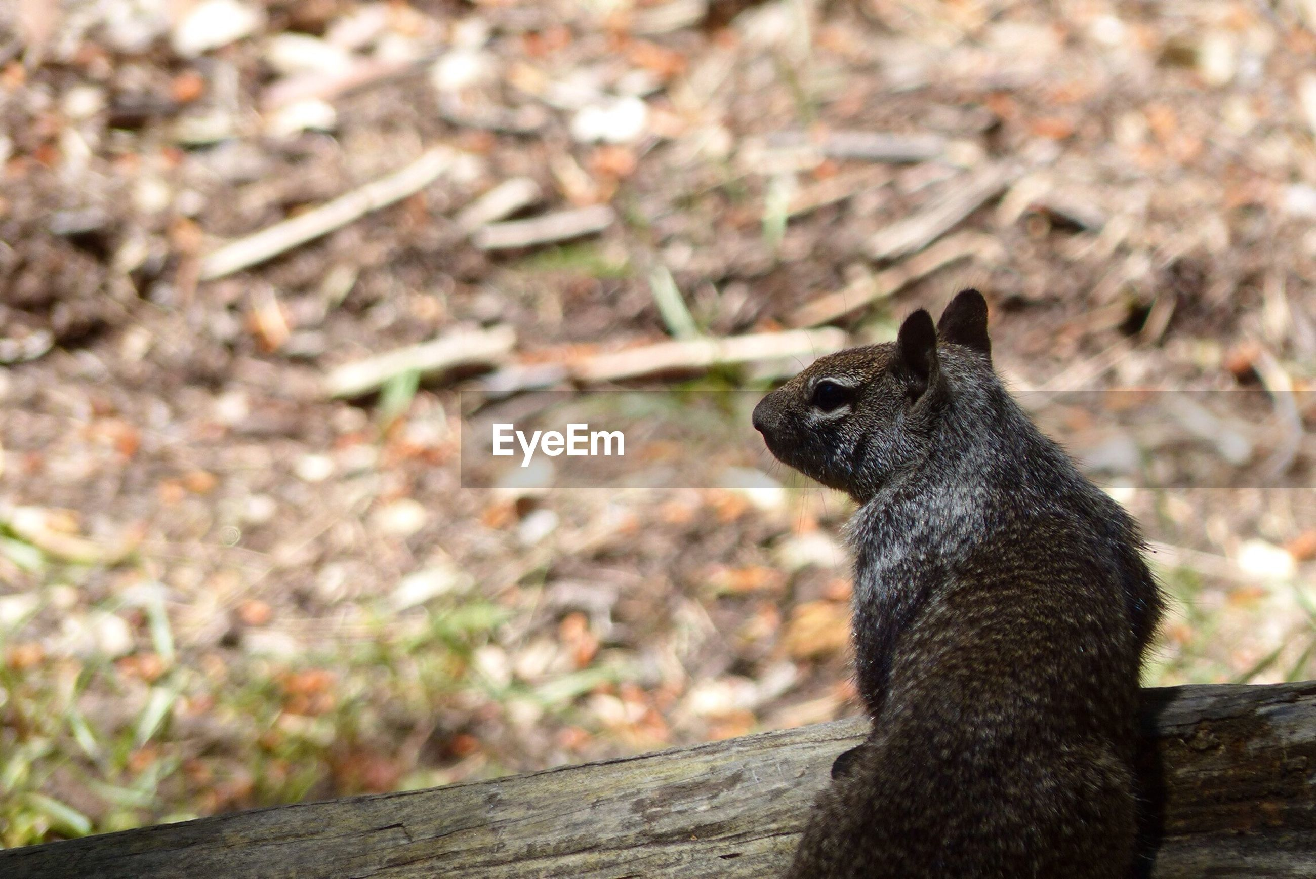 animal themes, one animal, animals in the wild, wildlife, focus on foreground, mammal, close-up, sitting, black color, wood - material, outdoors, looking away, sunlight, pets, nature, side view, day, no people, domestic animals, zoology