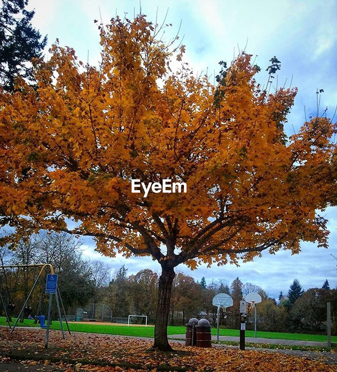 tree, autumn, leaf, change, nature, park - man made space, sky, beauty in nature, outdoors, day, tranquility, no people