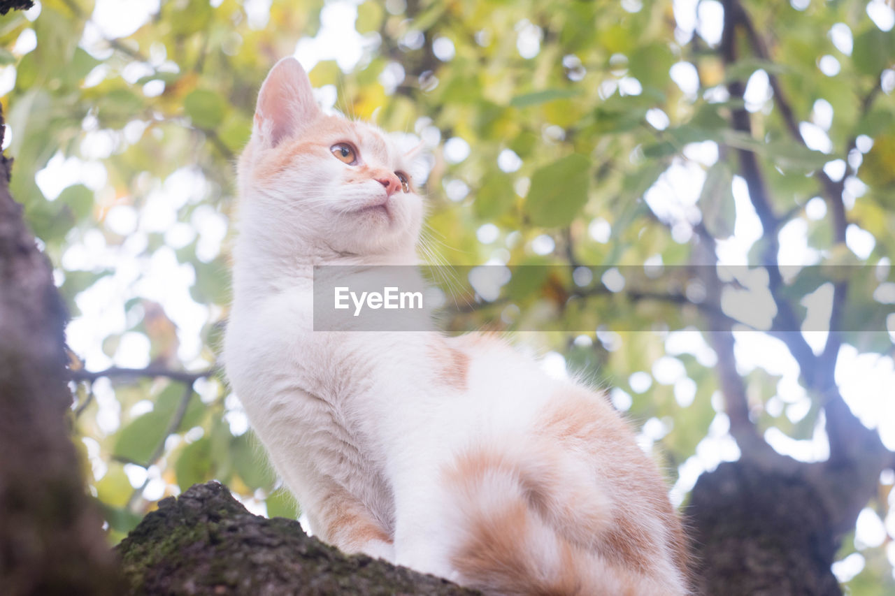 cat, animal themes, mammal, animal, domestic animals, one animal, domestic, domestic cat, feline, pets, tree, vertebrate, no people, low angle view, branch, focus on foreground, white color, plant, day, nature, whisker