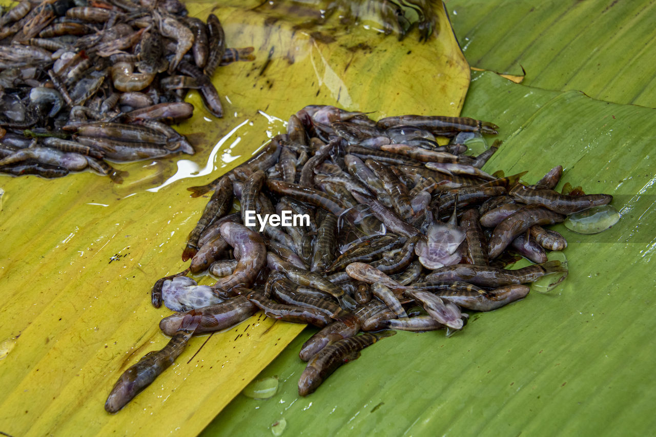 animal, animal themes, animal wildlife, food, food and drink, invertebrate, close-up, no people, animals in the wild, high angle view, insect, worm, vertebrate, group of animals, seafood, fish, large group of animals, freshness, leaves, marine