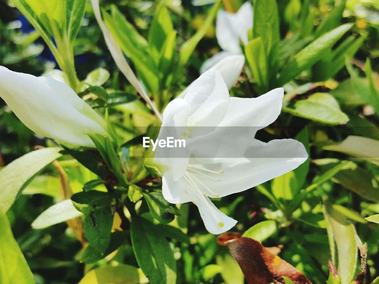 flower, petal, growth, beauty in nature, nature, plant, white color, flower head, fragility, freshness, blooming, leaf, close-up, day, no people, outdoors
