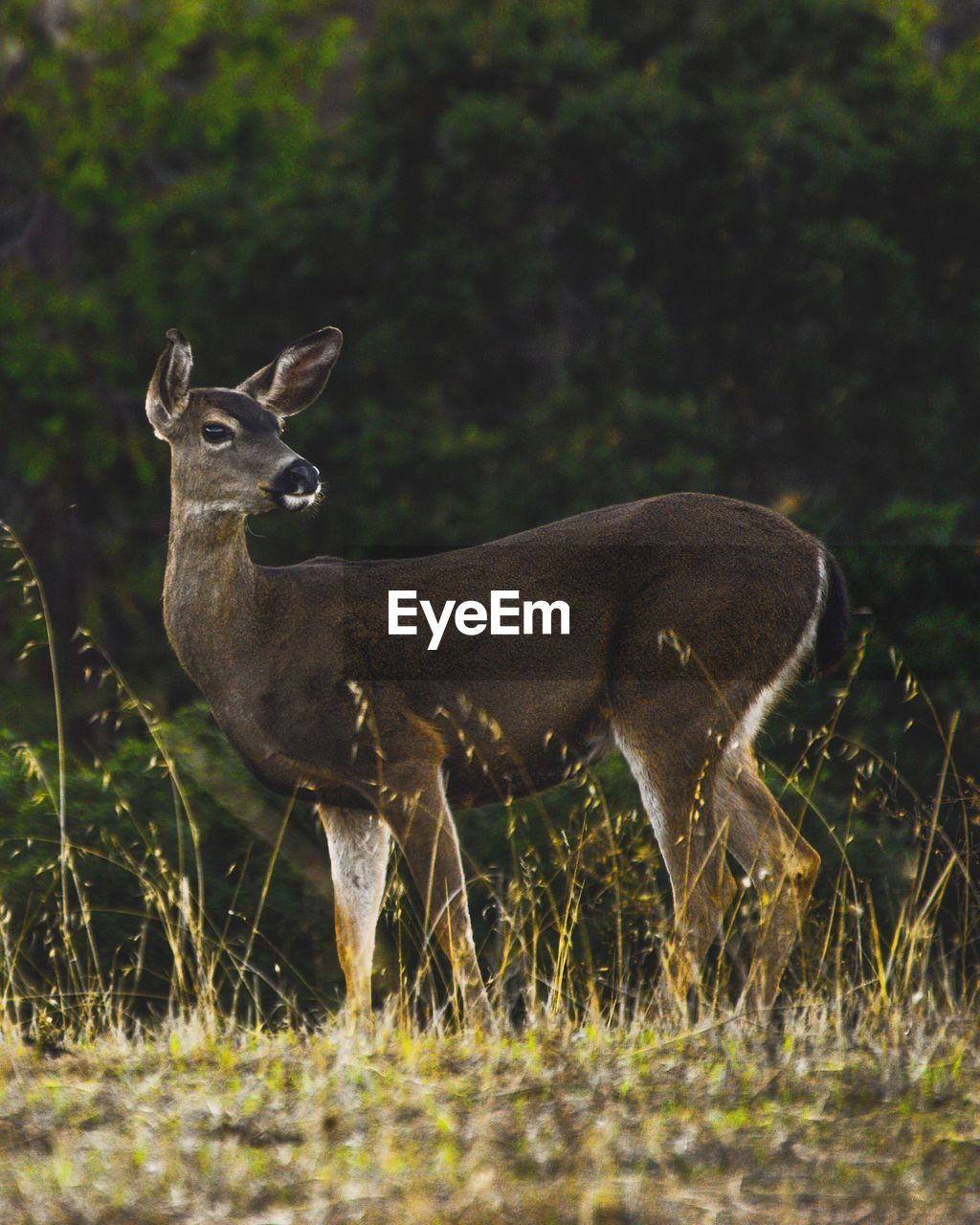 Low Angle View Of Deer On Field