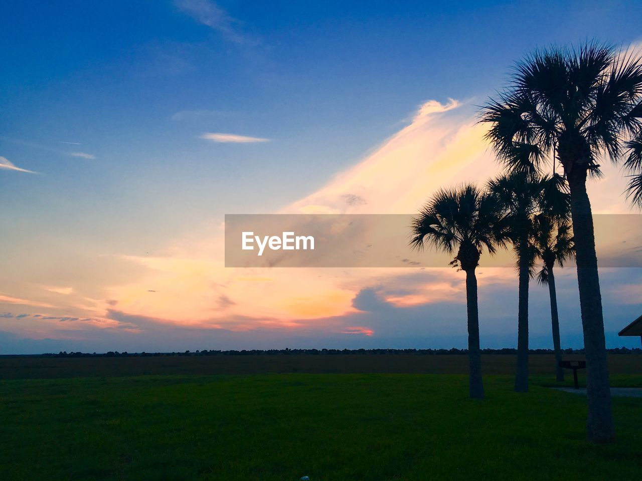sunset, palm tree, beauty in nature, tree, scenics, nature, tranquility, tranquil scene, sky, tree trunk, idyllic, landscape, grass, silhouette, no people, cloud - sky, outdoors, growth, travel destinations, day