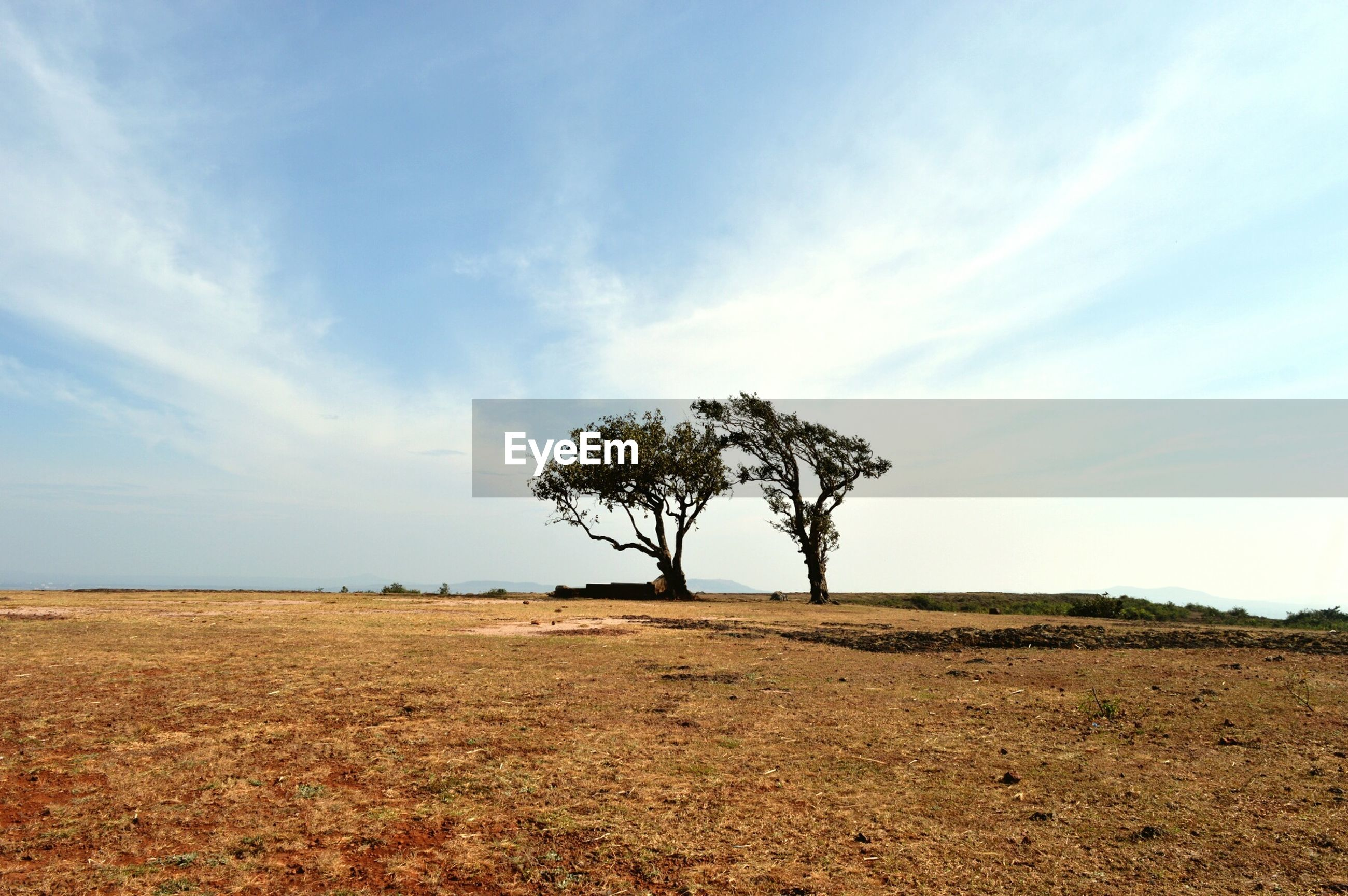 sky, tranquility, tranquil scene, landscape, tree, field, scenics, nature, beauty in nature, growth, cloud - sky, cloud, rural scene, horizon over land, grass, single tree, agriculture, non-urban scene, day, remote