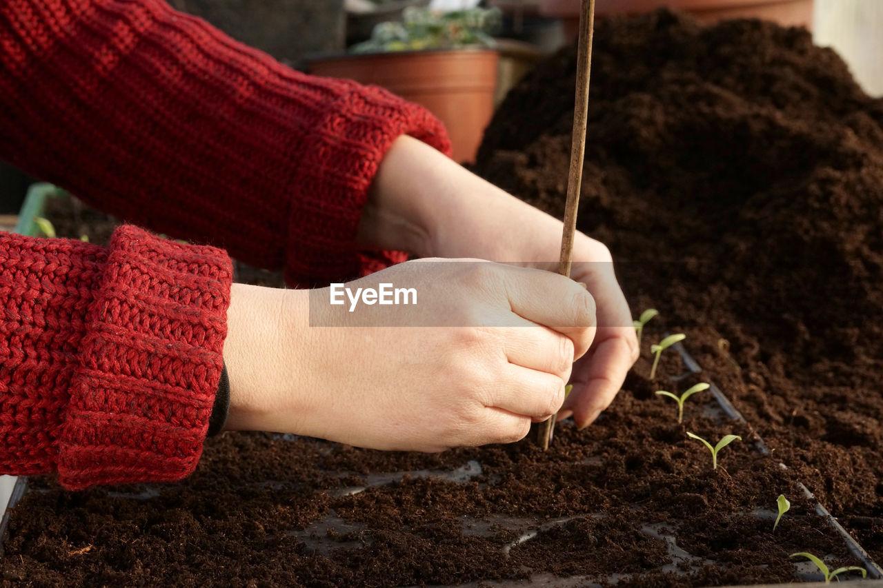 Cropped Image Of Gardener Planting Seedlings In Tray