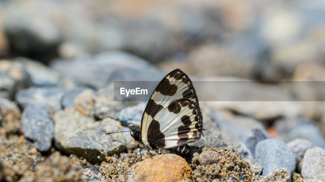 animal wildlife, animal themes, one animal, animal, animals in the wild, solid, rock, invertebrate, rock - object, butterfly - insect, insect, animal wing, beauty in nature, nature, day, no people, close-up, focus on foreground, stone - object, animal markings, outdoors, butterfly, pebble