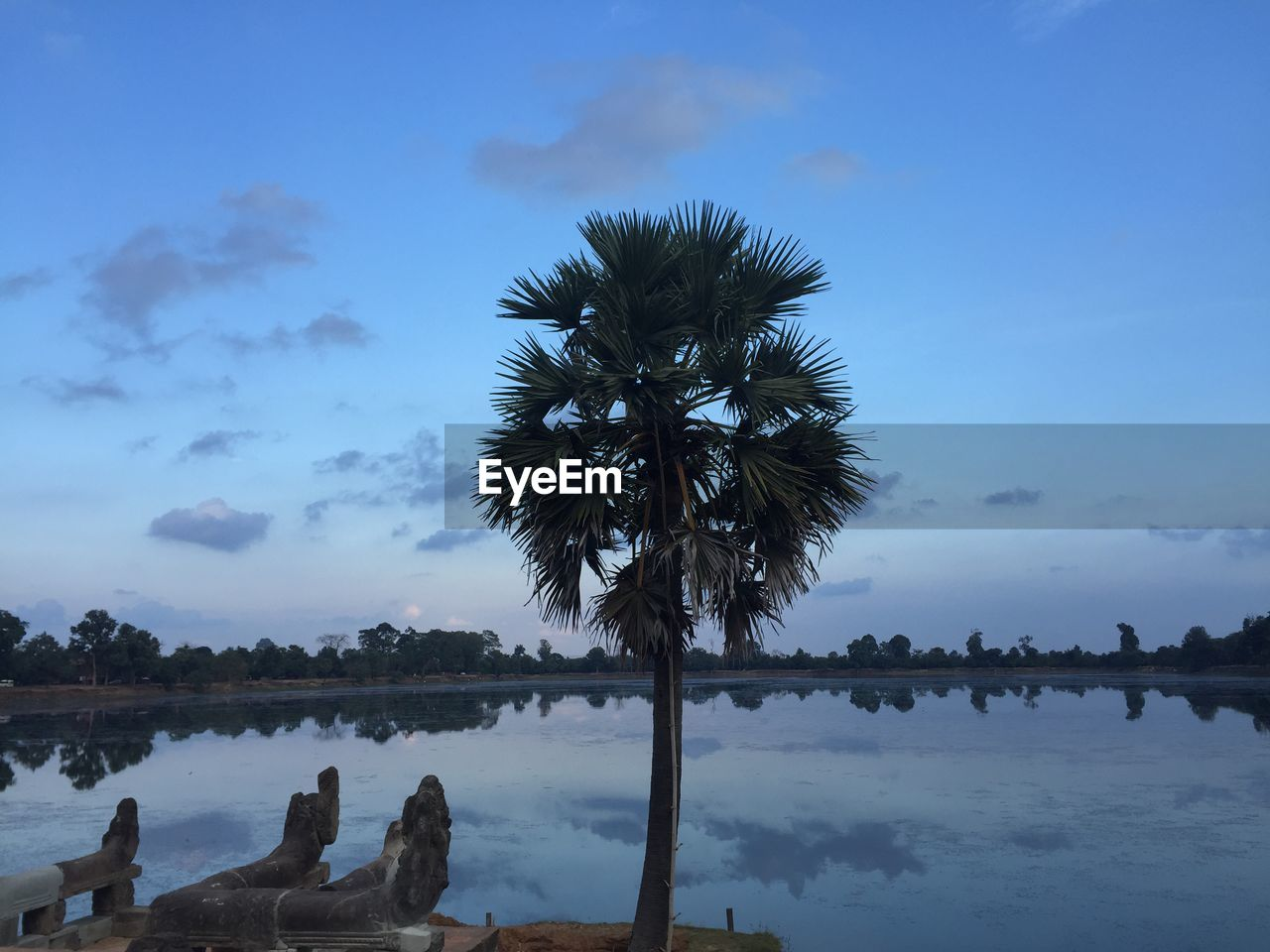 tree, sky, water, nature, beauty in nature, outdoors, palm tree, scenics, cloud - sky, tranquility, tranquil scene, no people, tree trunk, day, lake, growth