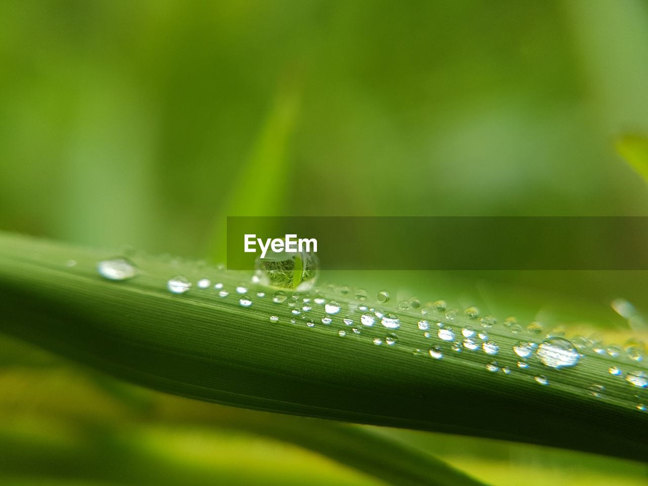 green color, drop, nature, water, growth, beauty in nature, close-up, wet, selective focus, leaf, no people, fragility, plant, outdoors, day, freshness, grass