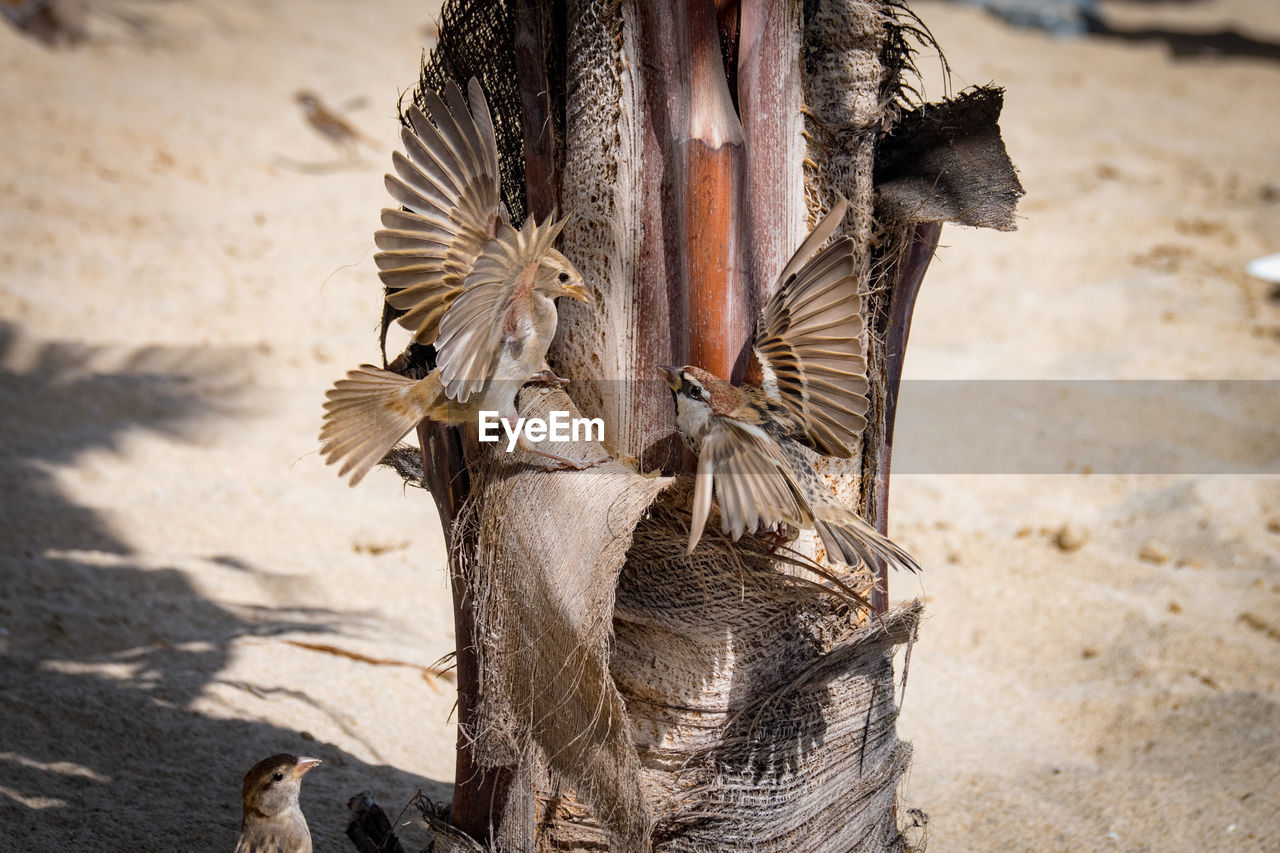 animal, focus on foreground, vertebrate, animal themes, day, no people, sunlight, animal wildlife, nature, bird, one animal, food, animals in the wild, outdoors, food and drink, close-up, land, sand