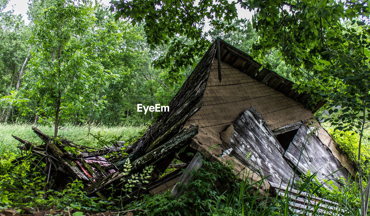 tree, built structure, building exterior, architecture, abandoned, no people, wood - material, low angle view, day, outdoors, green color, growth, roof, nature, branch, grass