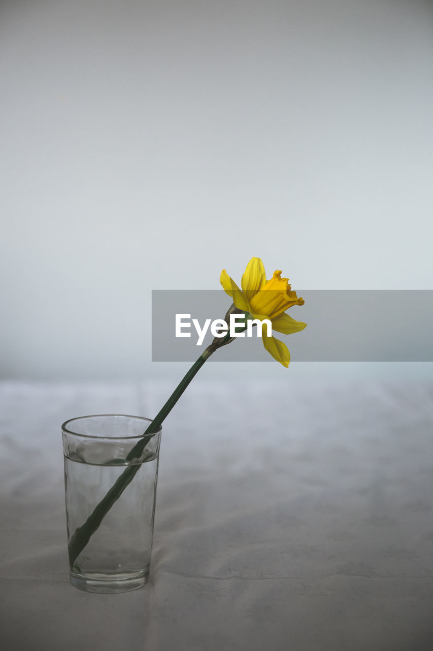 flowering plant, flower, yellow, freshness, vulnerability, fragility, beauty in nature, plant, nature, flower head, petal, inflorescence, close-up, no people, water, glass - material, growth, transparent, table, outdoors, glass