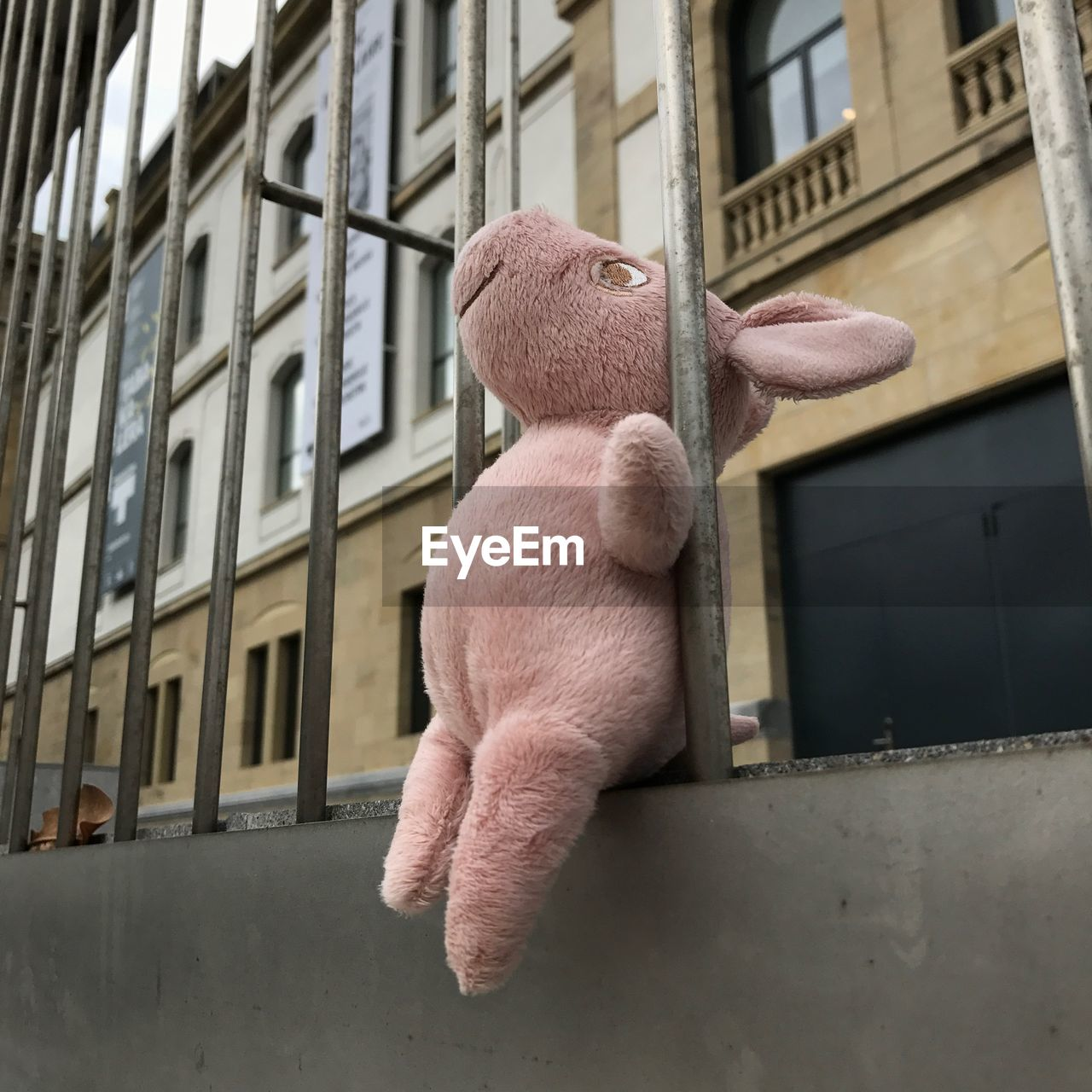 mammal, built structure, building exterior, architecture, animal themes, no people, animal, window, one animal, stuffed toy, domestic, day, domestic animals, animal representation, pets, building, representation, toy, pink color, outdoors