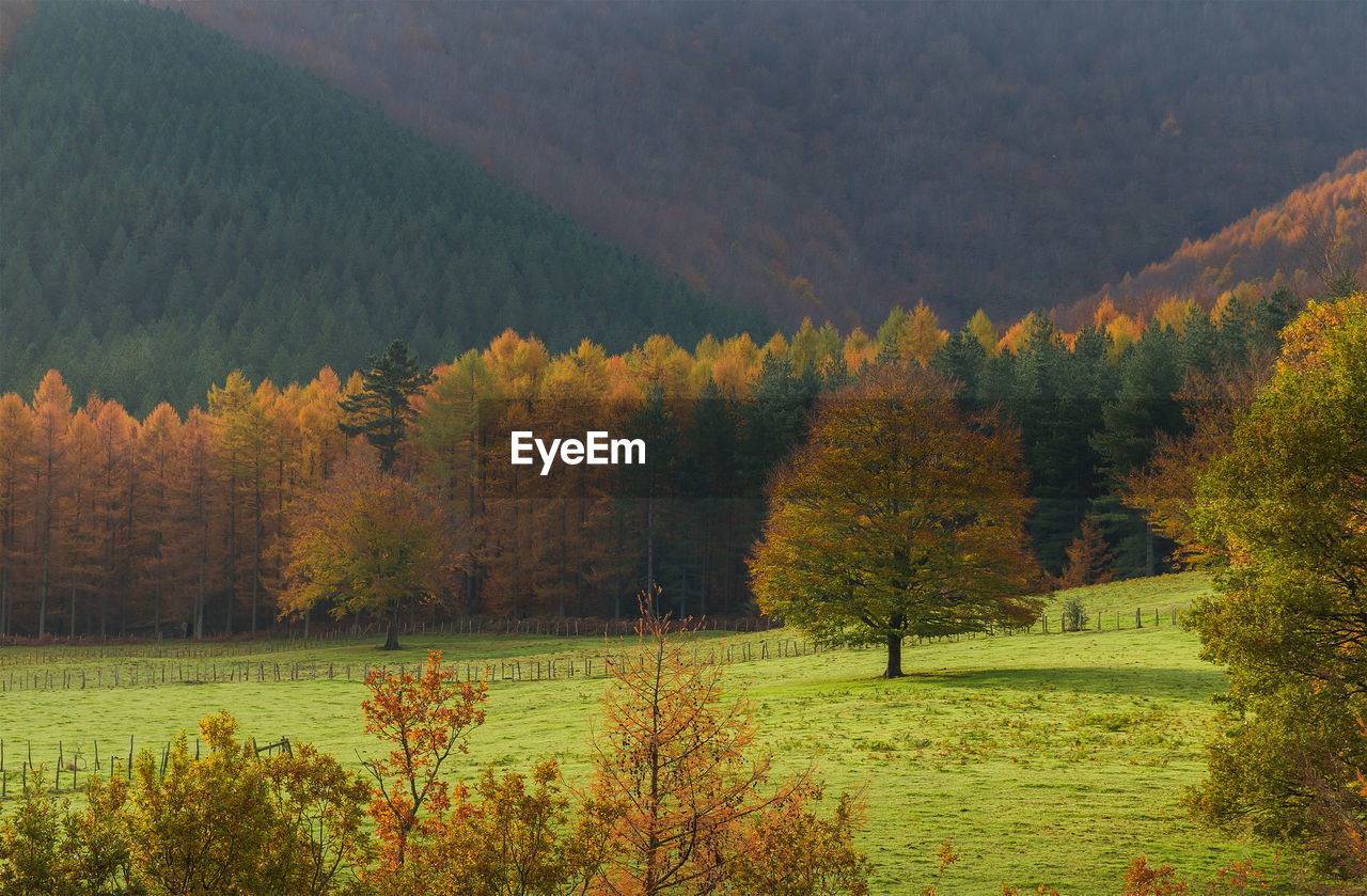 Scenic view of pine trees in forest during autumn