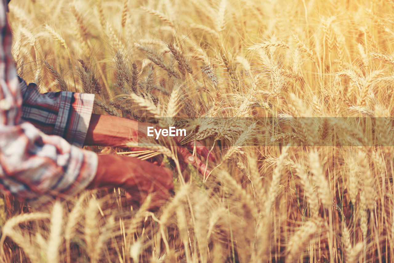 field, real people, grass, growth, one person, nature, lifestyles, cereal plant, agriculture, wheat, human hand, outdoors, straw, leisure activity, men, day, plant, sunlight, rural scene, human body part, farmer, women, beauty in nature, low section, close-up, people