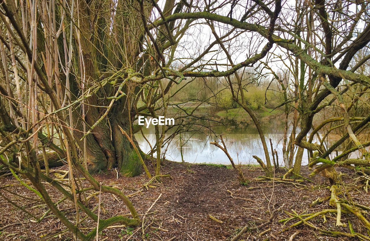 tree, beauty in nature, nature, water, outdoors, river, tranquil scene, tranquility, bare tree, no people, forest, day, landscape, branch, scenics, growth, grass