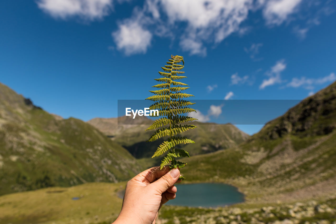 Cropped Image Of Hand Holding Fern Against Mountains