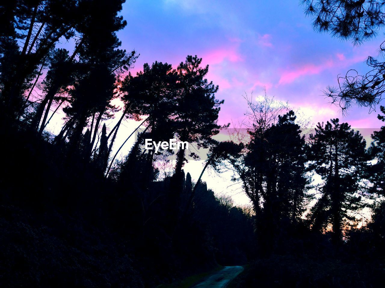 LOW ANGLE VIEW OF SILHOUETTE TREES AGAINST SKY IN FOREST