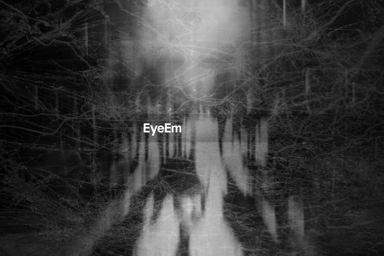 tree, forest, spooky, land, plant, woodland, nature, one person, mystery, fear, night, dark, ghost, horror, outdoors, tranquility, non-urban scene, surreal