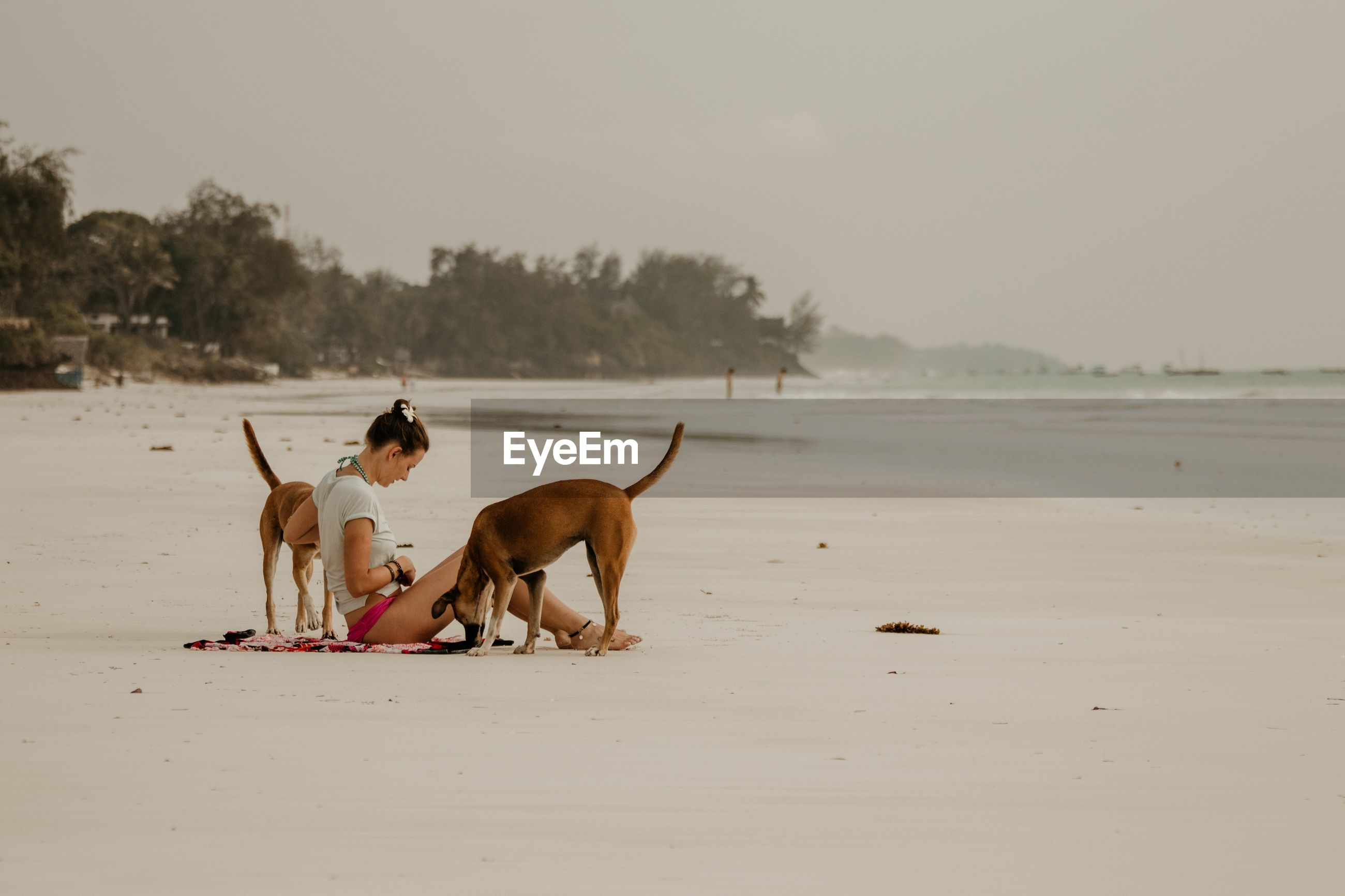 Side view of woman sitting with dogs at sandy beach