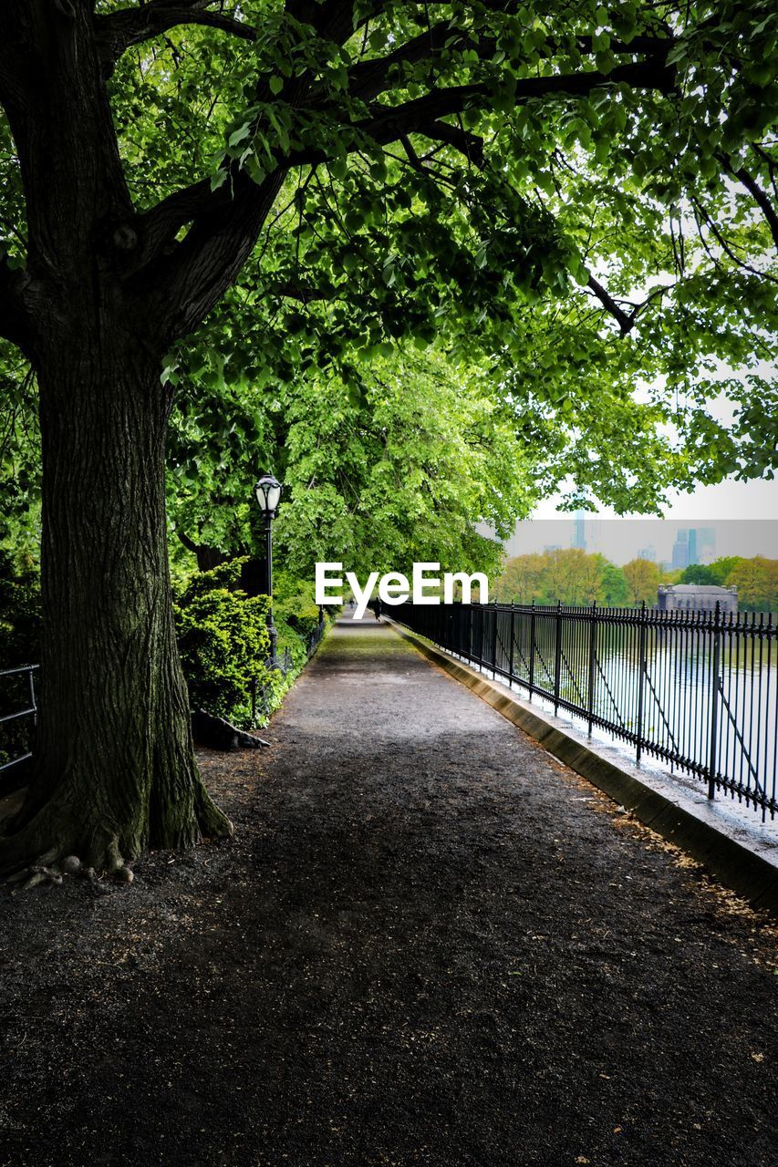 tree, plant, nature, direction, growth, tree trunk, trunk, the way forward, outdoors, footpath, day, tranquility, park, green color, bridge, connection, beauty in nature, no people, built structure, diminishing perspective