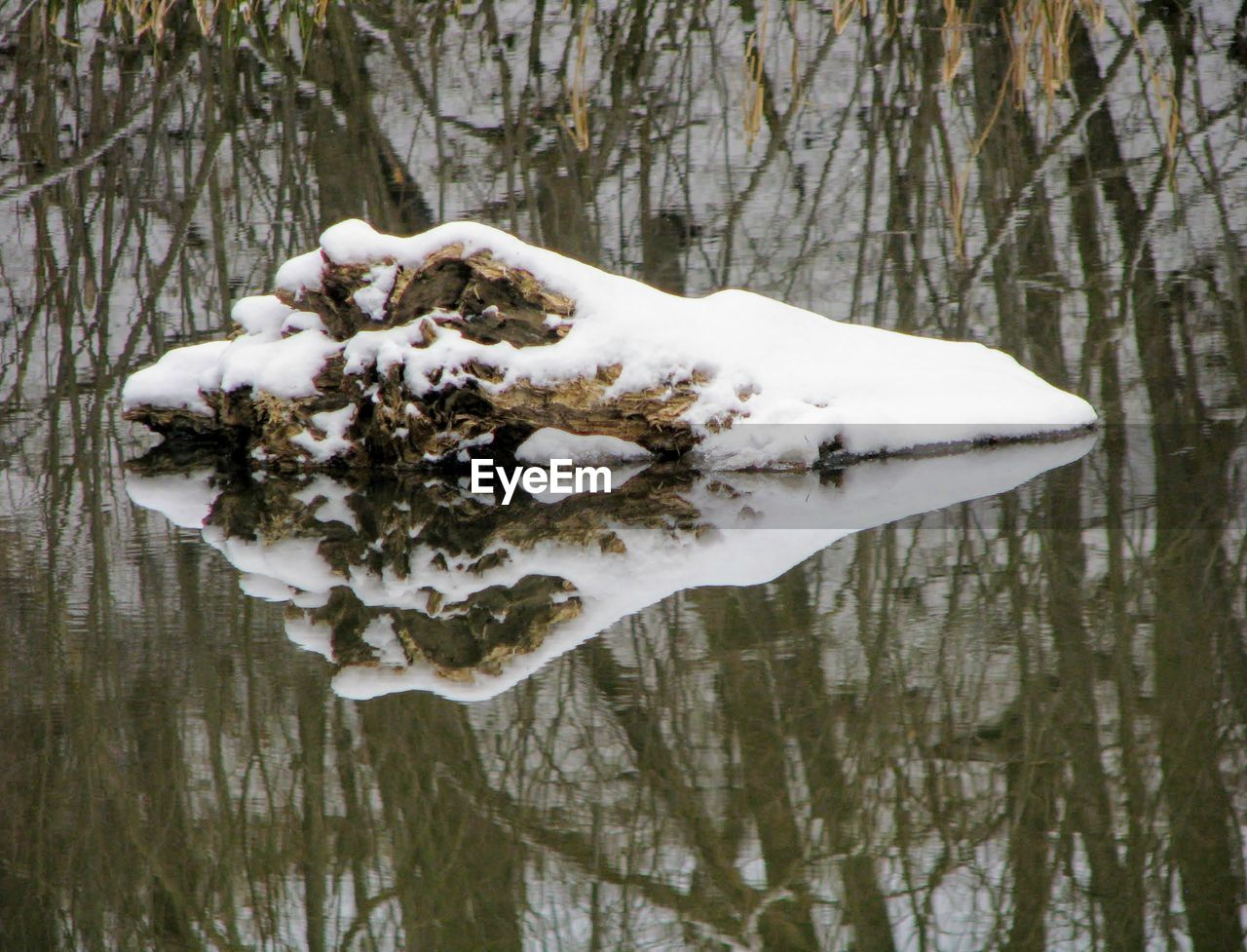 tree, snow, cold temperature, winter, plant, nature, water, lake, no people, day, reflection, white color, animal, forest, wood - material, waterfront, one animal, tranquility
