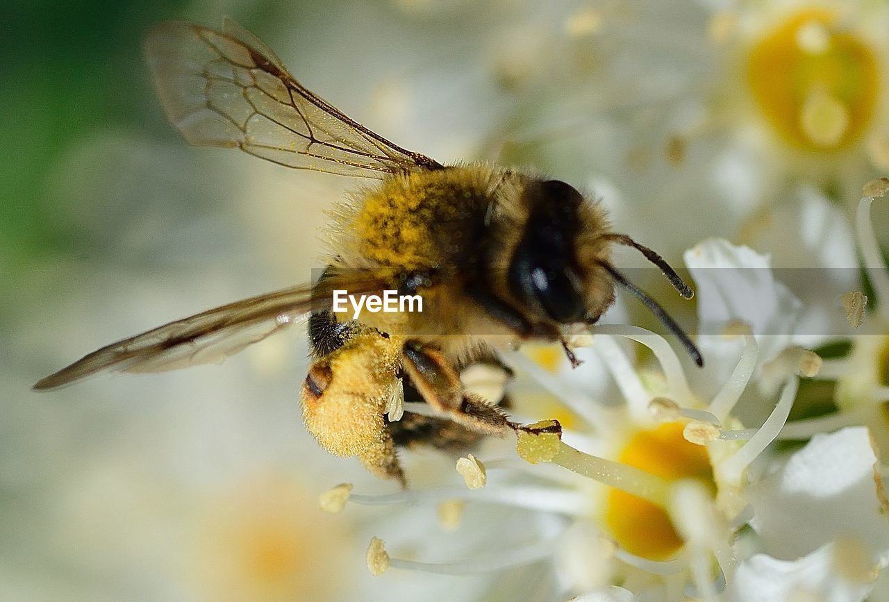 insect, flowering plant, flower, animals in the wild, animal themes, invertebrate, animal wildlife, animal, beauty in nature, plant, one animal, bee, close-up, fragility, pollination, vulnerability, petal, growth, freshness, selective focus, flower head, no people, pollen