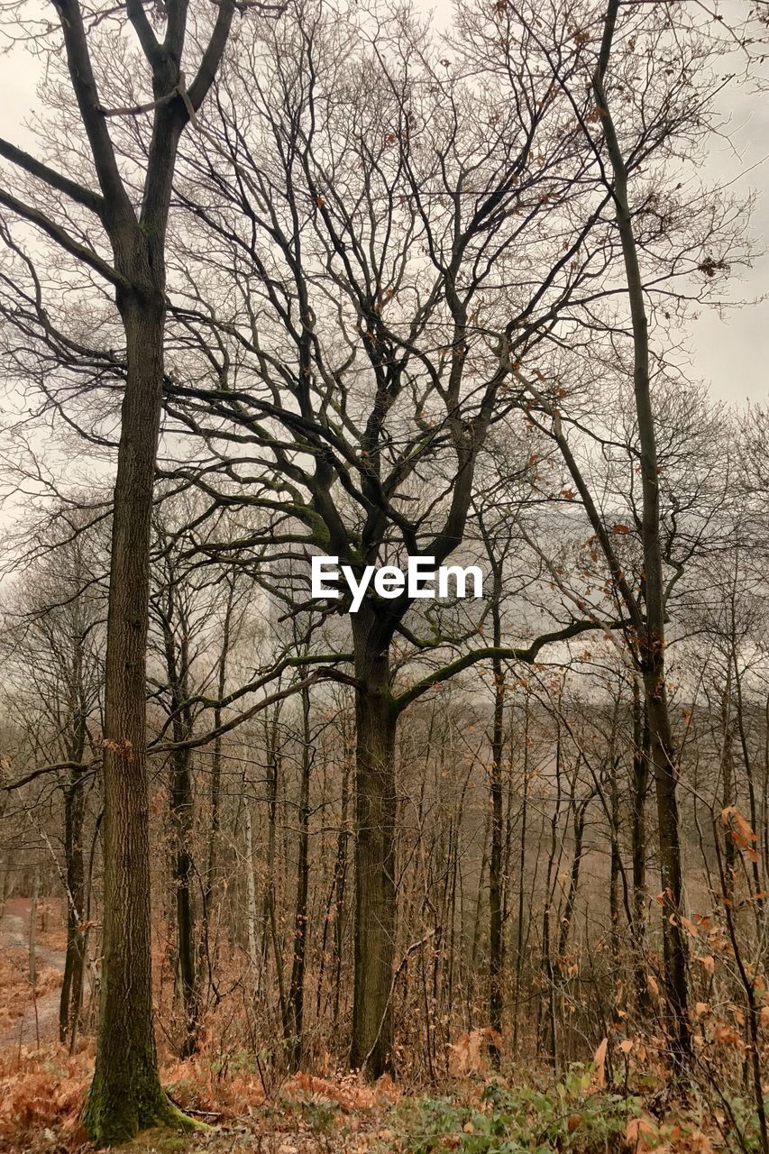 tree, bare tree, plant, trunk, tree trunk, land, forest, nature, no people, tranquility, branch, day, woodland, sky, outdoors, scenics - nature, non-urban scene, beauty in nature, landscape, field