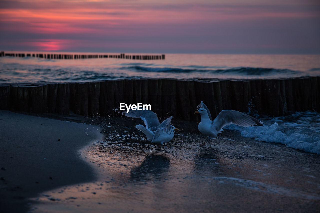 Seagulls At Beach Against Cloudy Sky At Dusk
