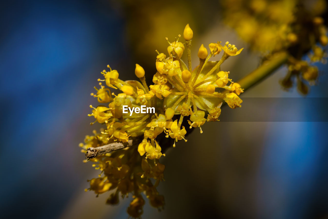 flower, flowering plant, vulnerability, fragility, plant, yellow, beauty in nature, growth, close-up, freshness, flower head, nature, selective focus, petal, inflorescence, no people, focus on foreground, day, outdoors, pollen