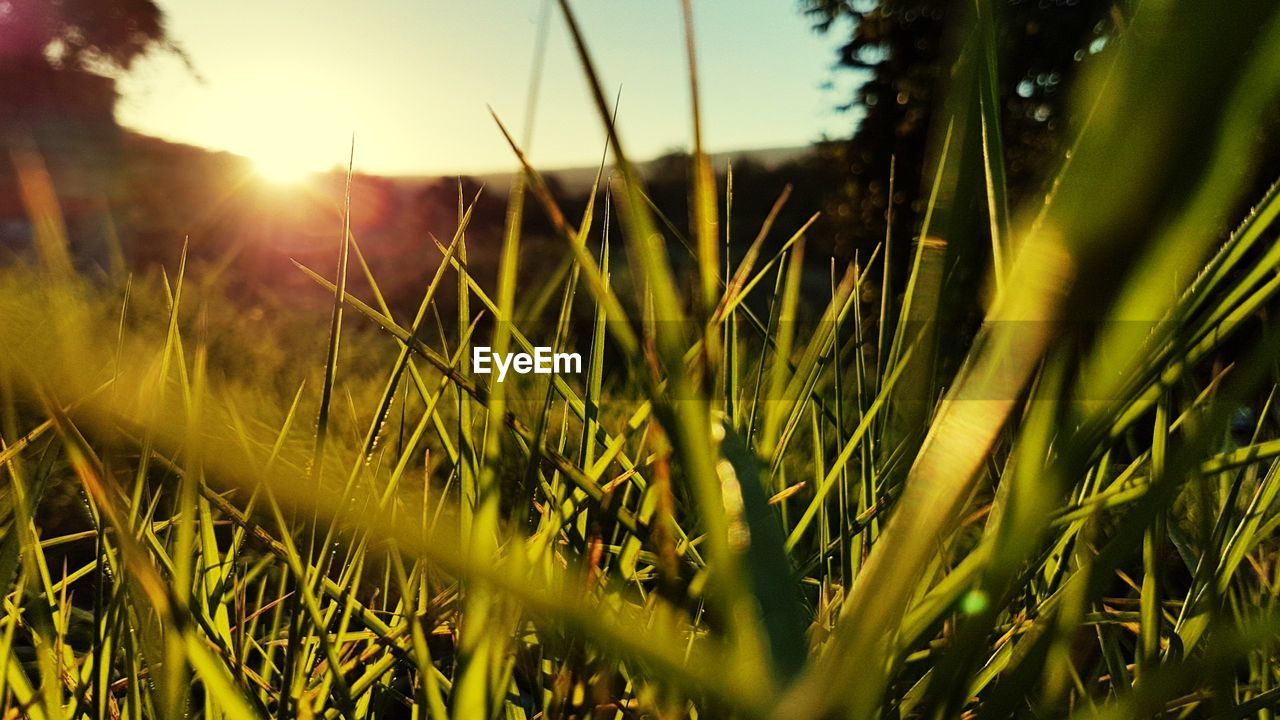 growth, nature, grass, plant, field, no people, tranquility, outdoors, beauty in nature, close-up, day, freshness, sky