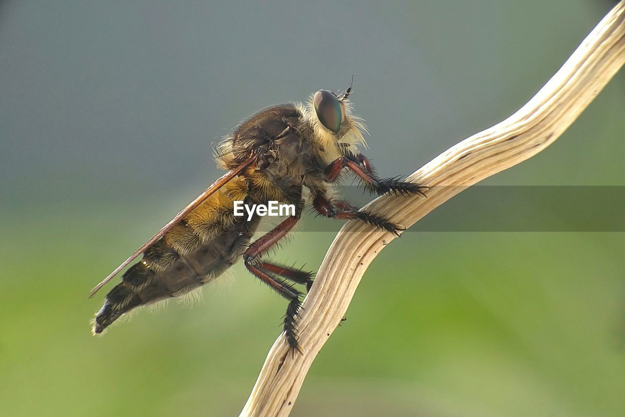 animal themes, insect, animals in the wild, one animal, animal wildlife, nature, no people, close-up, day, outdoors, perching