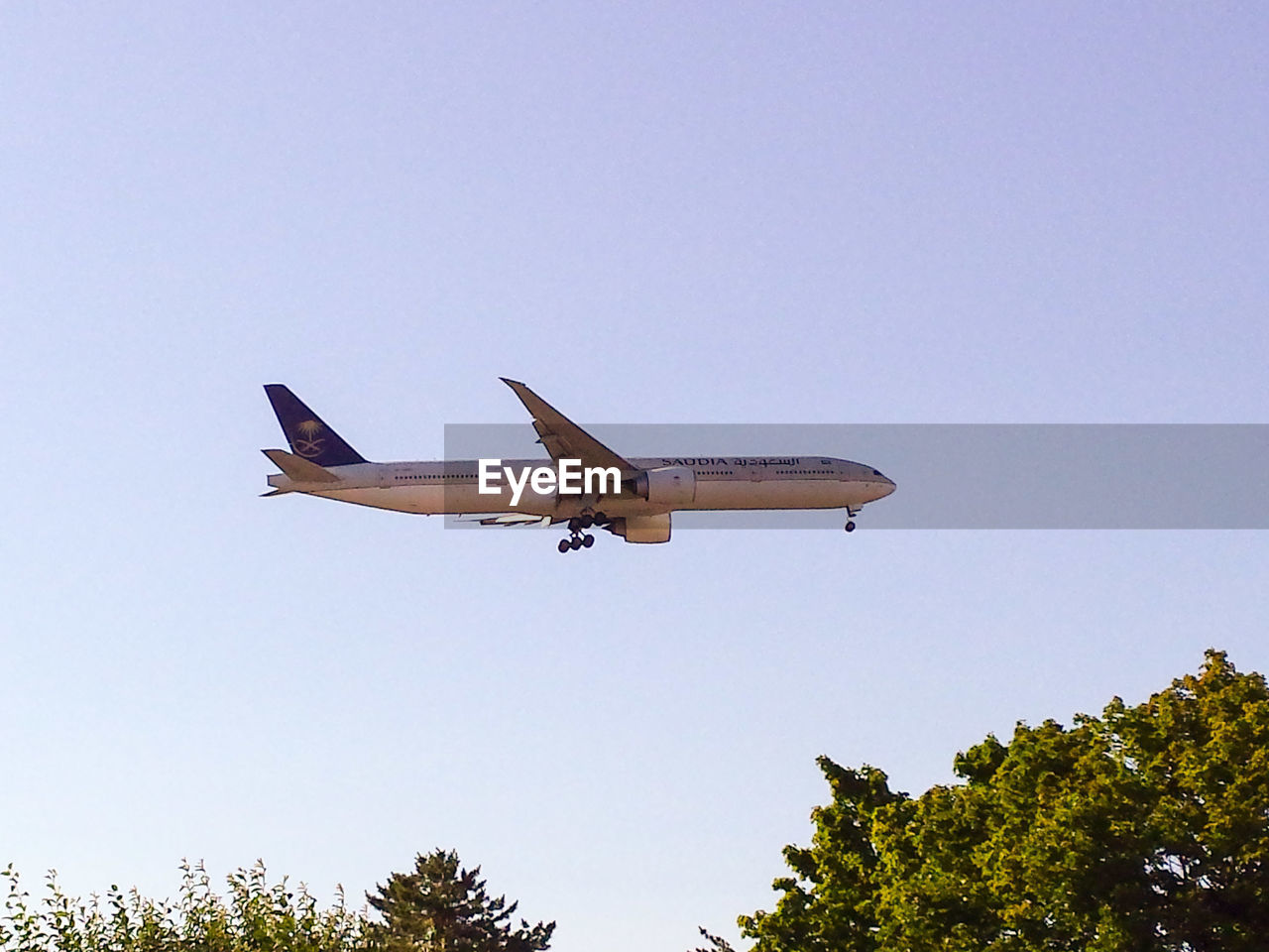 flying, airplane, low angle view, tree, clear sky, transportation, air vehicle, journey, copy space, travel, mode of transport, no people, mid-air, sky, outdoors, blue, day, nature