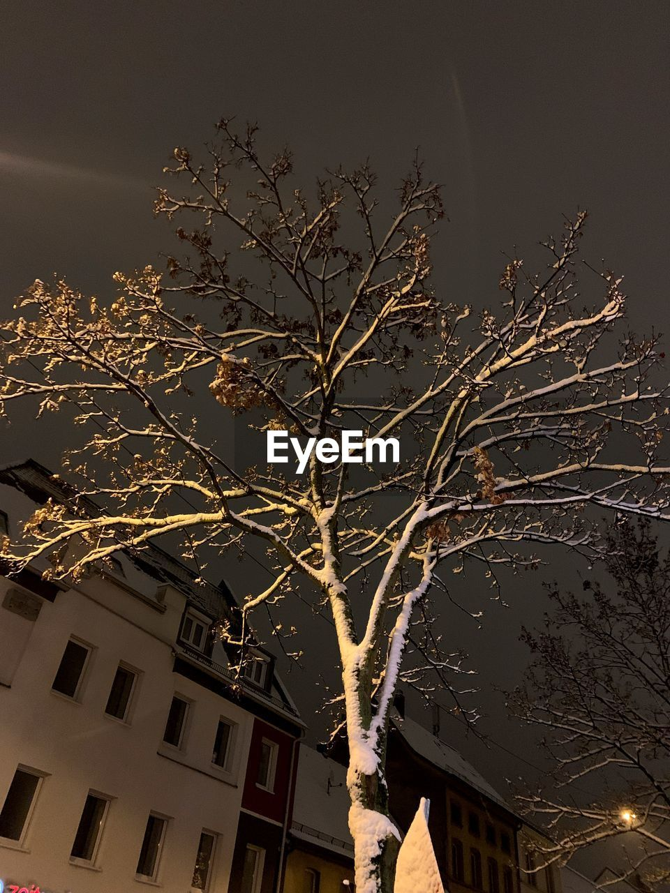building exterior, architecture, built structure, tree, low angle view, building, plant, nature, night, no people, sky, house, illuminated, residential district, branch, city, outdoors, tree trunk, trunk, bare tree