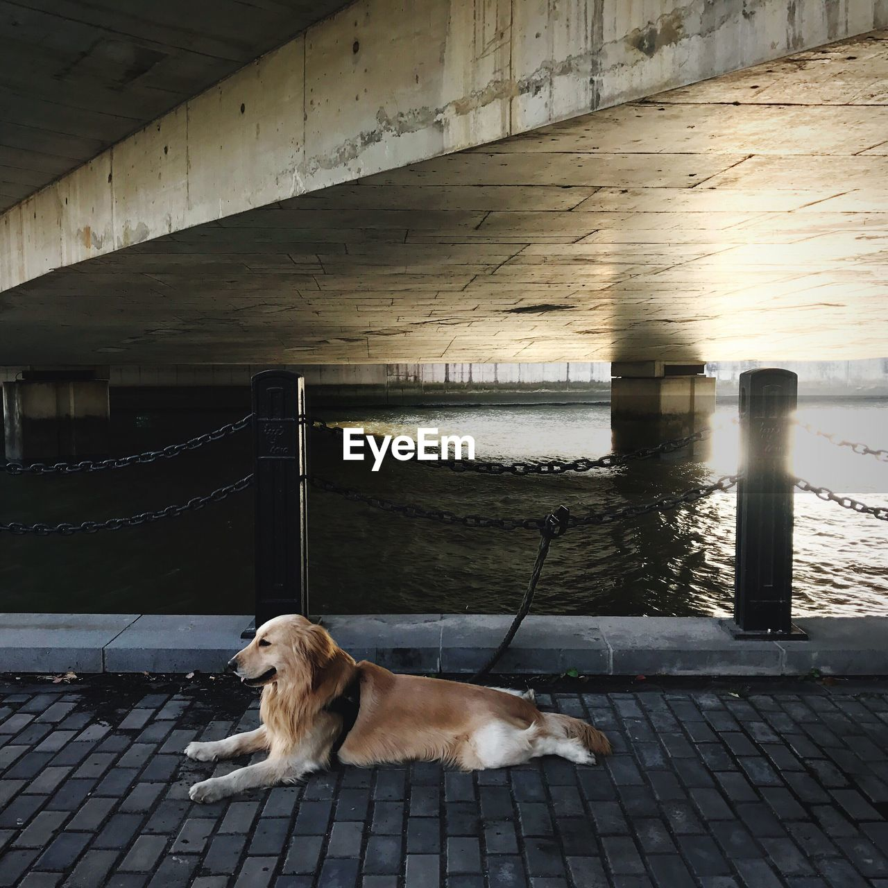 Dog on pier by river