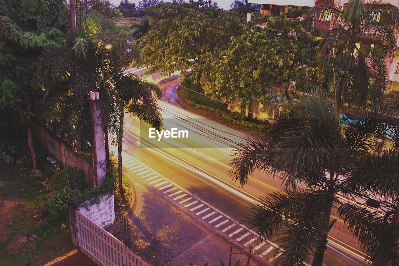 High Angle View Of Palm Trees