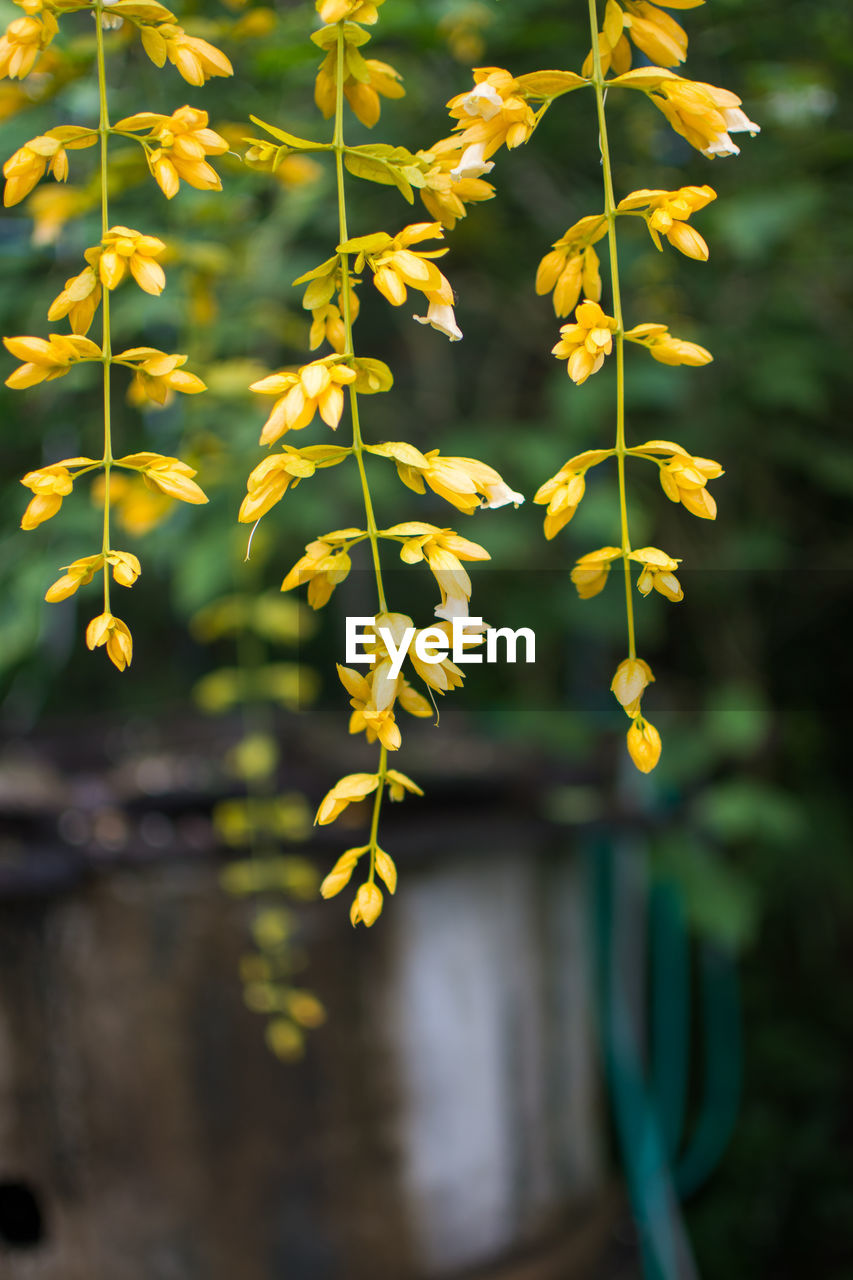 plant, flowering plant, flower, growth, beauty in nature, fragility, vulnerability, close-up, freshness, nature, focus on foreground, no people, day, yellow, selective focus, outdoors, petal, flower head, plant stem, botany